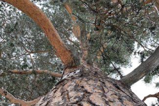 trad skog arvidsjaur